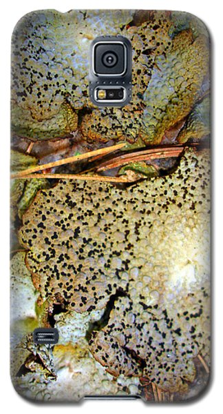 Galaxy S5 Case featuring the photograph Abstraction In Lichen by Lynda Lehmann