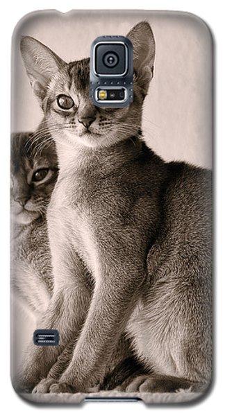 Abyssinian Kittens Galaxy S5 Case