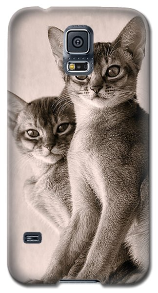 Abyssinian Kittens Galaxy S5 Case by Ari Salmela