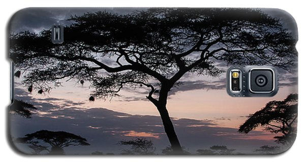 Acacia Trees Sunset Galaxy S5 Case