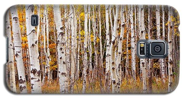 Acadia Birch Galaxy S5 Case