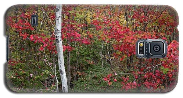 Acadia Fall Colors Galaxy S5 Case