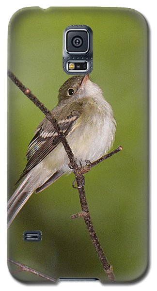 Acadian Flycatcher Galaxy S5 Case by Alan Lenk