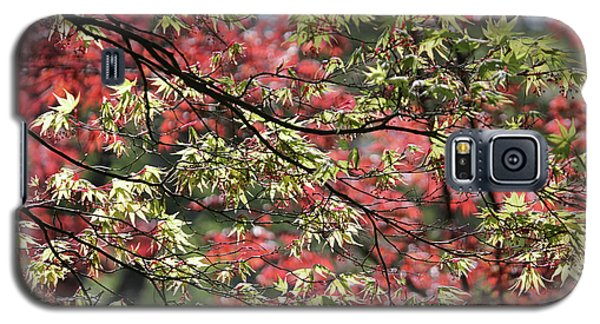 Acer Leaves In Spring Galaxy S5 Case