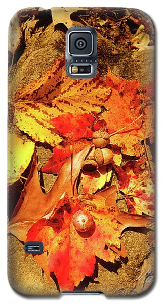 Galaxy S5 Case featuring the photograph Acorns Fall Maple Leaf by Meta Gatschenberger