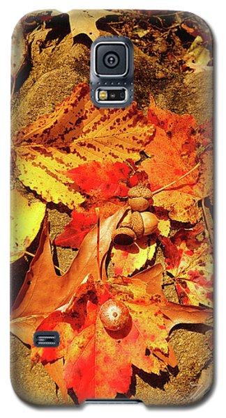 Acorns Fall Maple Leaf Galaxy S5 Case