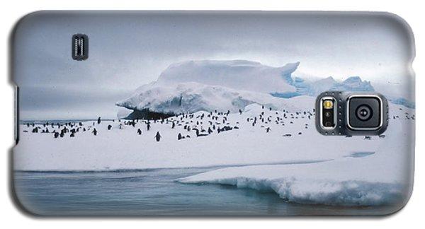 Adelie Penguins On Iceberg Weddell Sea Galaxy S5 Case