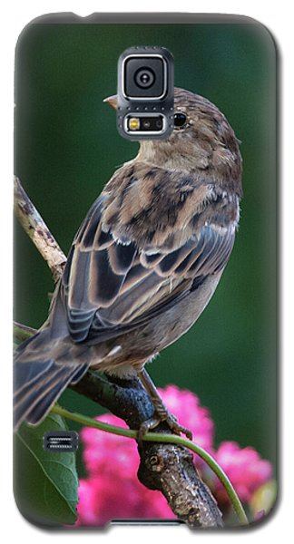Adorable House Finch Galaxy S5 Case by Jim Moore