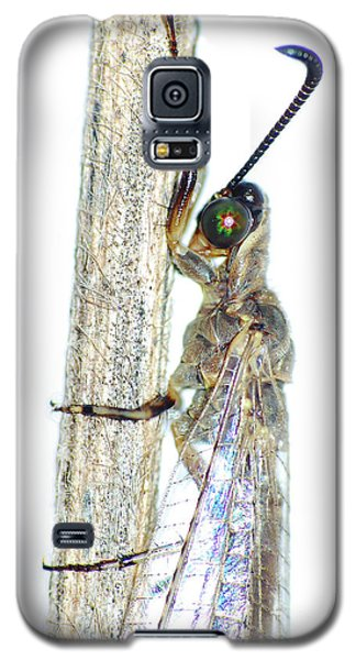 Adult Ant Lion Galaxy S5 Case