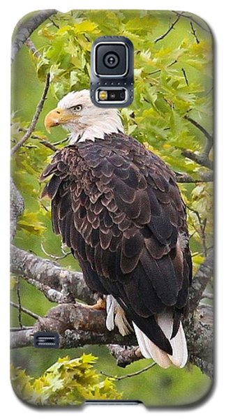 Galaxy S5 Case featuring the photograph Adult Bald Eagle by Debbie Stahre