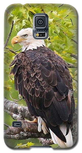 Adult Bald Eagle Galaxy S5 Case by Debbie Stahre