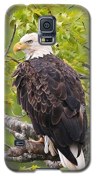 Adult Bald Eagle Galaxy S5 Case