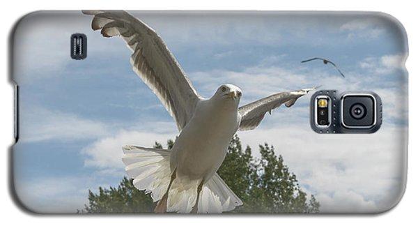 Adult Seagull In Flight Galaxy S5 Case