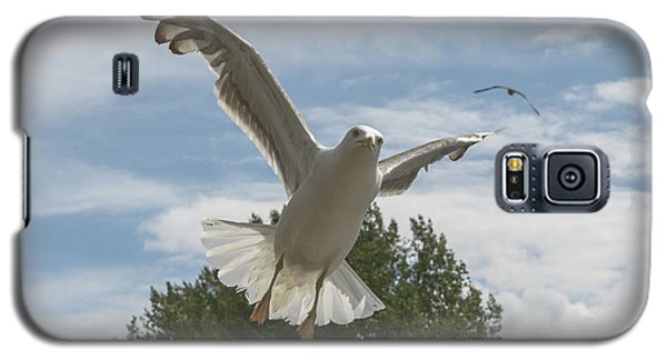 Adult Seagull In Flight Galaxy S5 Case