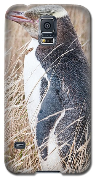 Adult Yellow-eyed Penguin 2 Galaxy S5 Case