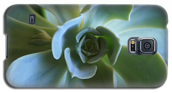 Galaxy S5 Case featuring the photograph Aeonium by Marna Edwards Flavell