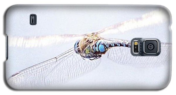 Aeshna Juncea - Common Hawker In Galaxy S5 Case by John Edwards