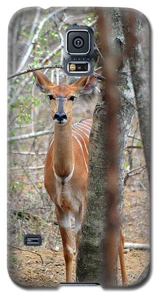Africa Safari Bushbuck 2 Galaxy S5 Case