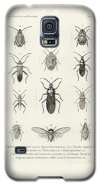 African Bugs And Insects Galaxy S5 Case