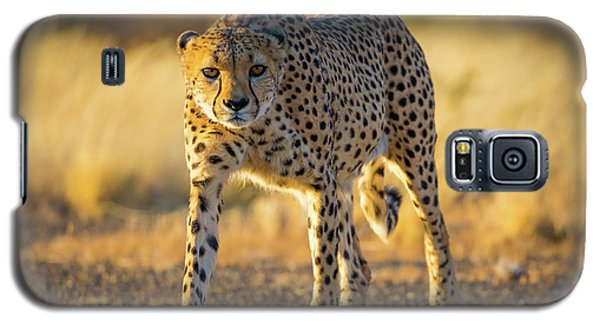 African Cheetah Galaxy S5 Case by Inge Johnsson