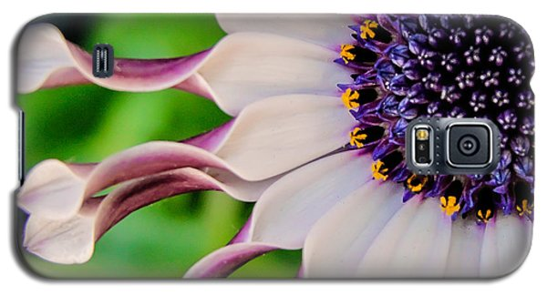 Galaxy S5 Case featuring the photograph African Daisy Squared by TK Goforth