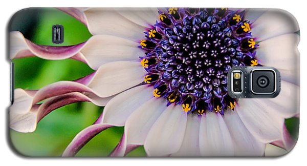 Galaxy S5 Case featuring the photograph African Daisy by TK Goforth