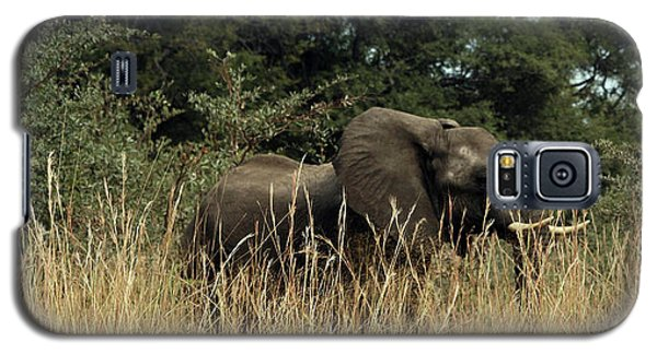 African Elephant In Tall Grass Galaxy S5 Case