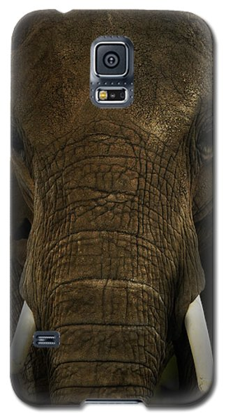 Galaxy S5 Case featuring the photograph African Elephant by Michael Cummings