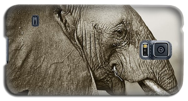 African Elephant Profile  Duotoned Galaxy S5 Case by Liz Leyden