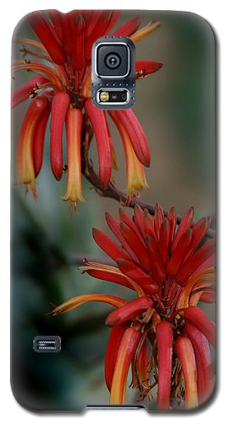 African Fire Lily Galaxy S5 Case