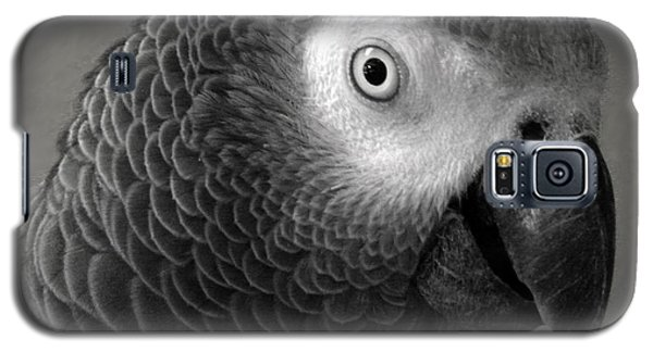 African Gray Galaxy S5 Case by Sandi OReilly