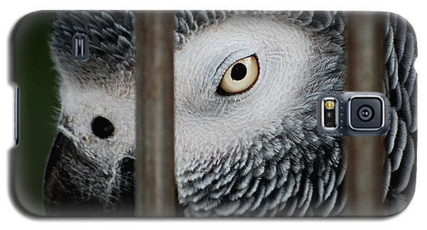 African Grey Galaxy S5 Case by Robert Meanor