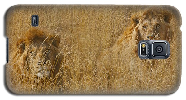 African Lion Brothers Galaxy S5 Case