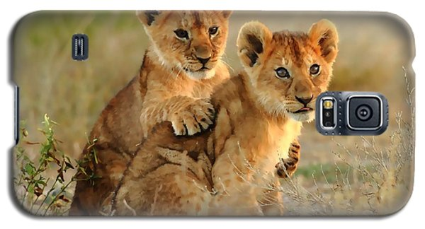 African Lion Cubs Galaxy S5 Case by Maciek Froncisz