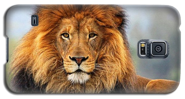 African Lion 1 Galaxy S5 Case