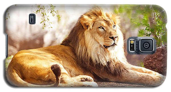 African Lion Laying In Forest Galaxy S5 Case