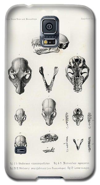 African Mammal Skulls Galaxy S5 Case