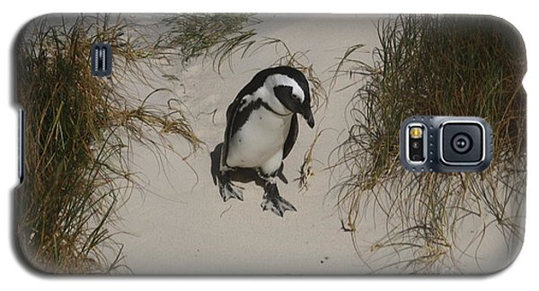 African Penguin On A Mission Galaxy S5 Case