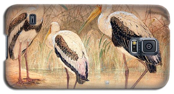 African Tantalus Pseudotantalus Ibis Galaxy S5 Case