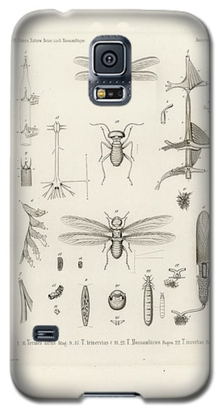 African Termites And Their Anatomy Galaxy S5 Case