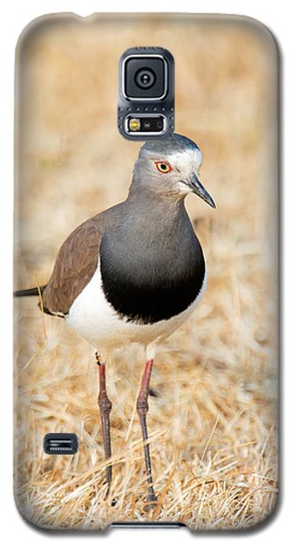 African Wattled Lapwing Vanellus Galaxy S5 Case
