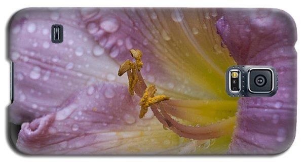 After The Rain Galaxy S5 Case by Deborah Klubertanz