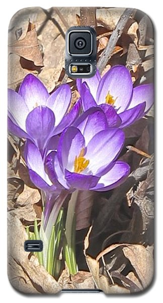 After The Snow Has Gone Galaxy S5 Case