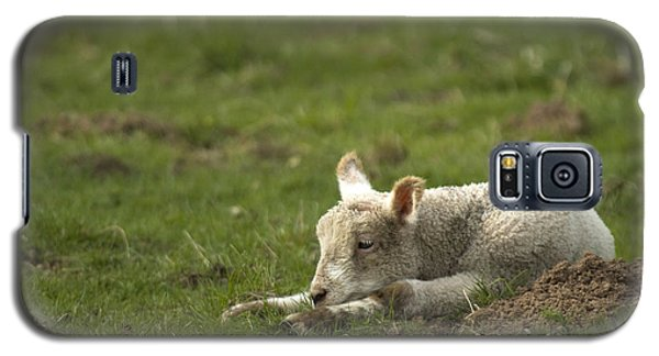 Sheep Galaxy S5 Case - Afternoon Nap by Angel Ciesniarska