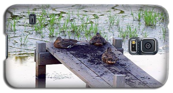 Afternoon Rest Galaxy S5 Case by Deborah  Crew-Johnson