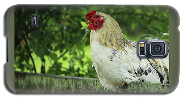 Afternoon Siesta Galaxy S5 Case by Rowana Ray