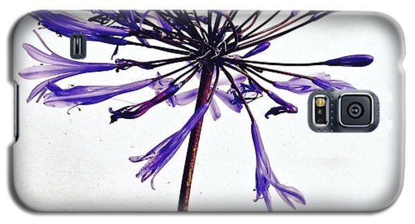 Galaxy S5 Case - Agapanthus 2 by Julie Gebhardt