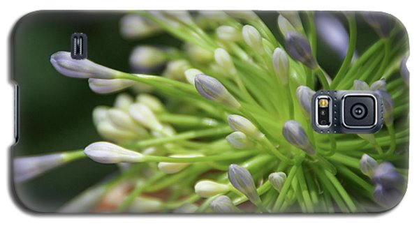Galaxy S5 Case featuring the photograph Agapanthus, The Spider Flower by Yoel Koskas