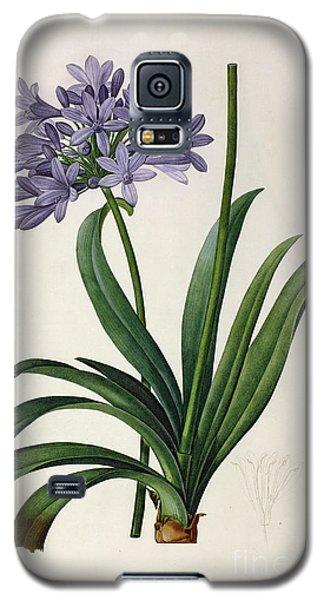 Agapanthus Umbrellatus Galaxy S5 Case