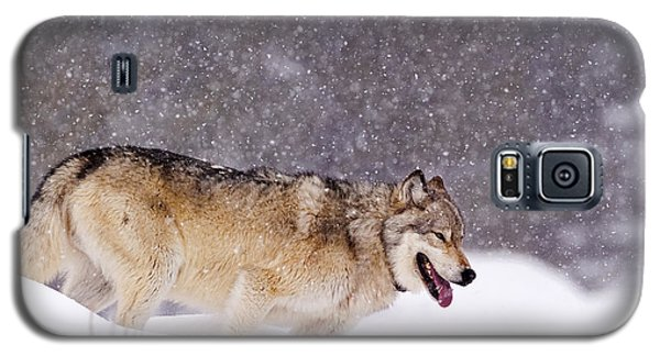 Agate Wolf 113m In Falling Snow Galaxy S5 Case